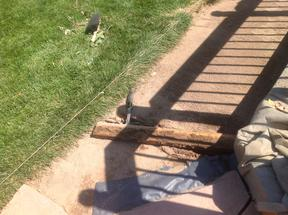 Removing the buried 2x4 used to level the crusher fine base for flagstone patio.